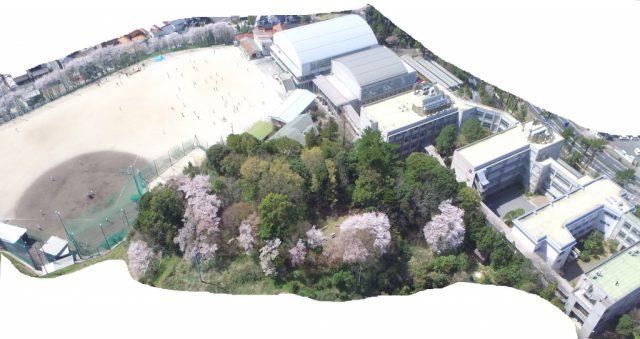 久徴園の桜